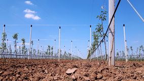 Νέα σύγχρονα μήλα που αυξάνονται την περιοχή Στοκ Φωτογραφίες