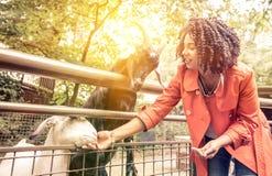 Νέα ταΐζοντας ζώα γυναικών στο ζωολογικό κήπο Στοκ εικόνα με δικαίωμα ελεύθερης χρήσης