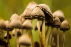 Νέα φθινοπωρινά μανιτάρια στο δάσος Στοκ φωτογραφία με δικαίωμα ελεύθερης χρήσης