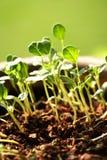 νέα φυτά ζωής μωρών Στοκ Φωτογραφία