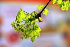 Νέα φύλλα σε ένα κόκκινο υπόβαθρο στοκ εικόνες