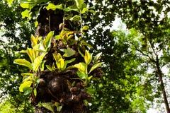 Νέα φύλλα Στοκ Εικόνα