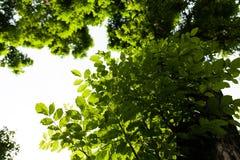 Νέα φύλλα Στοκ Φωτογραφία