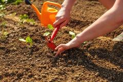 Νέα χέρια γυναικών που σκάβουν λίγη τρύπα με τη μικρά σκαπάνη προνυμφών και το εκτάριο Στοκ Εικόνα