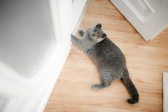 Νέα χαριτωμένη γάτα που στηρίζεται στο ξύλινο πάτωμα στοκ φωτογραφίες με δικαίωμα ελεύθερης χρήσης