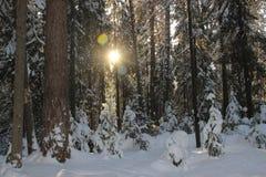 Νέα χριστουγεννιάτικα δέντρα Στοκ Εικόνες