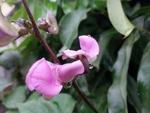 Νέα χρωματισμένη ταπετσαρία λουλουδιών στοκ φωτογραφία με δικαίωμα ελεύθερης χρήσης