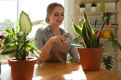 Νέα όμορφη γυναίκα που φροντίζει τις εγχώριες εγκαταστάσεις στον ξύλινο πίνακα στοκ εικόνες με δικαίωμα ελεύθερης χρήσης