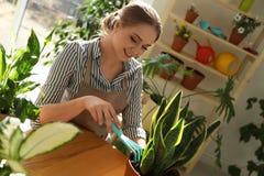 Νέα όμορφη γυναίκα που φροντίζει τις εγχώριες εγκαταστάσεις στον ξύλινο πίνακα στοκ φωτογραφίες με δικαίωμα ελεύθερης χρήσης