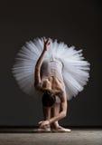 Νέα όμορφη τοποθέτηση ballerina στο στούντιο στοκ φωτογραφίες με δικαίωμα ελεύθερης χρήσης