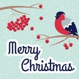 Νέες έτος και Χαρούμενα Χριστούγεννα Bullfinch Στοκ Εικόνα