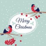 Νέες έτος και Χαρούμενα Χριστούγεννα Bullfinch Στοκ φωτογραφία με δικαίωμα ελεύθερης χρήσης