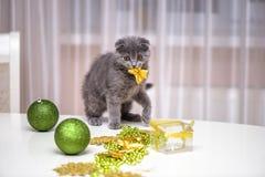 Νέες βρετανικές σκωτσέζικες πτυχές παιχνιδιού γατών με το decoratio Χριστουγέννων στοκ εικόνα