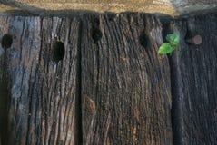Νέες εγκαταστάσεις αχρησιμοποίητο σε ξύλινο Στοκ φωτογραφία με δικαίωμα ελεύθερης χρήσης