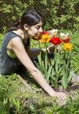 Νέες μυρίζοντας τουλίπες κηπουρών γυναικών Στοκ εικόνες με δικαίωμα ελεύθερης χρήσης