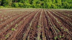 Νέες πράσινες εγκαταστάσεις σκόρδου στον αγροτικό τομέα φιλμ μικρού μήκους