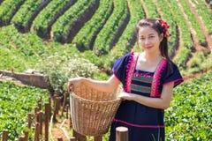 Νέες φυλετικές ασιατικές γυναίκες από τα φύλλα τσαγιού επιλογής της Ταϊλάνδης Στοκ Φωτογραφίες