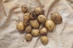 Νέες χρυσές πατάτες Yukon Στοκ Φωτογραφίες