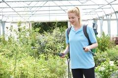 Νέες ψεκάζοντας εγκαταστάσεις γυναικών σε Polytunnel στο κέντρο κήπων Στοκ Εικόνες