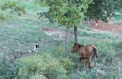 Νέοι άλογο και φύλακας στοκ φωτογραφίες με δικαίωμα ελεύθερης χρήσης