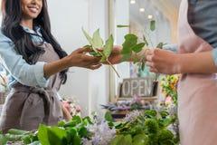 Νέοι ανθοκόμοι που τακτοποιούν τα όμορφα λουλούδια και τα πράσινα φύλλα στο ανθοπωλείο Στοκ φωτογραφίες με δικαίωμα ελεύθερης χρήσης
