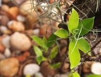 Νέοι βλαστοί του δέντρου στοκ φωτογραφία με δικαίωμα ελεύθερης χρήσης