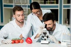 Νέοι επιστήμονες στα άσπρα παλτά που χρησιμοποιούν το μικροσκόπιο εξετάζοντας τα λαχανικά στο εργαστήριο στοκ εικόνες
