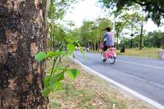 Νέοι φρέσκοι πράσινοι βλαστοί δέντρων στο φλοιό Στοκ Φωτογραφίες