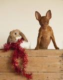 Νέοι χαριτωμένοι φίλοι έτους Κουτάβι και κουνέλι στο κόκκινο καπέλο Χριστουγέννων στοκ εικόνα