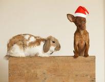 Νέοι χαριτωμένοι φίλοι έτους Κουτάβι και κουνέλι στο κόκκινο καπέλο Χριστουγέννων στοκ φωτογραφία