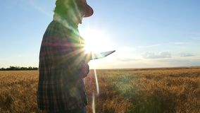 Νέος αγρότης γυναικών στον τομέα σίτου στο υπόβαθρο ηλιοβασιλέματος Ένα κορίτσι μαδά τις ακίδες σίτου, χρησιμοποιεί έπειτα μια τα απόθεμα βίντεο