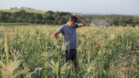 Νέος αγρότης που στέκεται και που στηρίζεται εργαζόμενος στον τομέα καλαμποκιού του οργανικού αγροκτήματος φιλμ μικρού μήκους