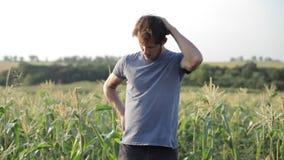 Νέος αγρότης που στέκεται και που στηρίζεται εργαζόμενος στον τομέα καλαμποκιού του οργανικού αγροκτήματος απόθεμα βίντεο