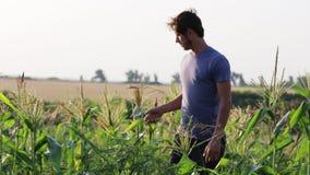 Νέος αγρότης που στέκεται και που στηρίζεται εργαζόμενος στο οργανικό αγρόκτημα eco τομέων καλαμποκιού φιλμ μικρού μήκους