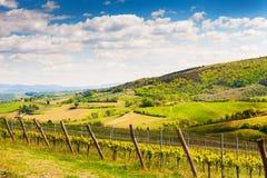 Νέος αμπελώνας στους λόφους στην Τοσκάνη, Ιταλία Στοκ φωτογραφίες με δικαίωμα ελεύθερης χρήσης
