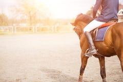 Νέος αναβάτης πλατών αλόγου στον τομέα με το διάστημα αντιγράφων Στοκ Φωτογραφίες