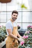 Νέος αρσενικός κηπουρός που τακτοποιεί τα λουλούδια Cyclamen στοκ φωτογραφίες με δικαίωμα ελεύθερης χρήσης
