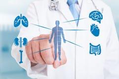 Νέος γιατρός που δείχνει στο σύγχρονο ολόγραμμα με τα εσωτερικά όργανα Στοκ φωτογραφία με δικαίωμα ελεύθερης χρήσης
