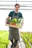 Νέος ευτυχής αγρότης με ένα σύνολο κλουβιών του λαχανικού Στοκ φωτογραφία με δικαίωμα ελεύθερης χρήσης