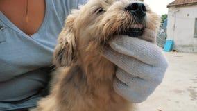 Νέος θηλυκός εθελοντής που βουρτσίζει το περιπλανώμενο σκυλί στο καταφύγιο Άνθρωποι, ζώα, που προσφέρονται εθελοντικά και που βοη φιλμ μικρού μήκους