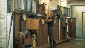 Νέος θηλυκός ιππικός μιλά σε ένα άλογο στους σταύλους απόθεμα βίντεο
