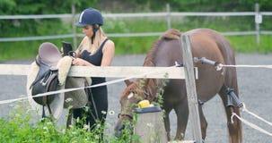 Νέος θηλυκός αναβάτης που προετοιμάζει το αραβικό άλογό της για την οδήγηση απόθεμα βίντεο