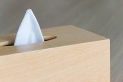Νέος ιστός στο ξύλινο κιβώτιο Στοκ φωτογραφίες με δικαίωμα ελεύθερης χρήσης
