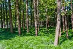 Νέος κεντρικός κήπος Hongqiao Στοκ εικόνες με δικαίωμα ελεύθερης χρήσης