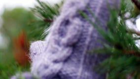 Νέος κώνος πεύκων εκμετάλλευσης γυναικών στα χέρια απόθεμα βίντεο