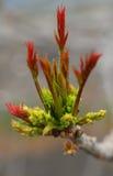Νέος κλάδος δέντρων στοκ φωτογραφία με δικαίωμα ελεύθερης χρήσης