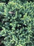νέος νεαρός βλαστός του κομψού, φυσικού δασικού υποβάθρου στοκ φωτογραφία με δικαίωμα ελεύθερης χρήσης