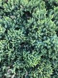 νέος νεαρός βλαστός του κομψού, φυσικού δασικού υποβάθρου στοκ φωτογραφίες