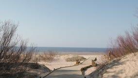Νέος ξύλινος δρόμος που οδηγούν από το δάσος αμμόλοφων παραλιών με τα πεύκα και λευκό που στέλνεται στον κόλπο της θάλασσας της Β απόθεμα βίντεο