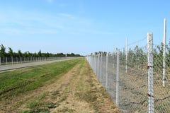 Νέος οπωρώνας μήλων Στοκ Εικόνες